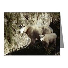 Mountain goats Note Cards (Pk of 20)