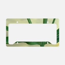 Peruvian Lily leaves License Plate Holder
