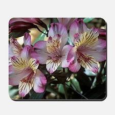 Peruvian lily (Alstroemeria 'Balance') Mousepad