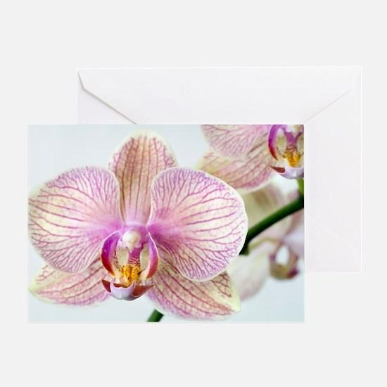 Phalaenopsis orchid (Phalaenopsis sp Greeting Card