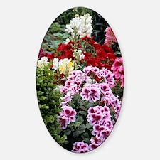 Pelargonium x domesticum Decal