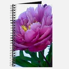 Peony flower (Paeonia sp.) Journal