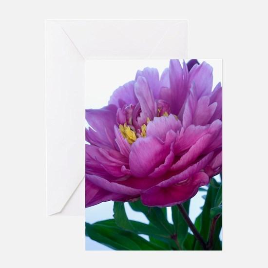 Peony flower (Paeonia sp.) Greeting Card