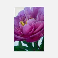Peony flower (Paeonia sp.) Rectangle Magnet