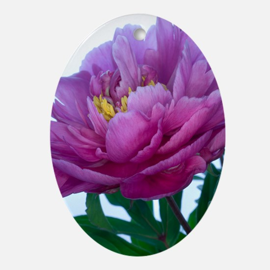 Peony flower (Paeonia sp.) Oval Ornament