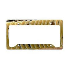 Pea plant xylem License Plate Holder