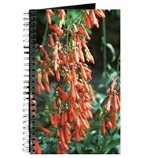 Penstemon barbatus barbatus Journal