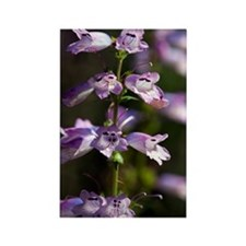 Penstemon 'Strictus' Rectangle Magnet