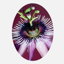 Passion flower (Passiflora amethysti Oval Ornament