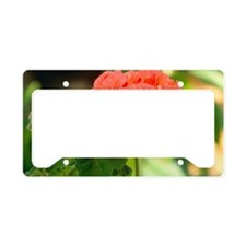 Pelargonium x hortum License Plate Holder
