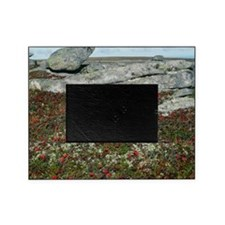 Field of berries by rock formations Picture Frame