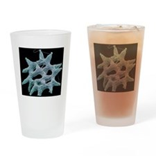 Pediastrum alga, SEM Drinking Glass