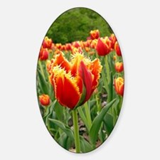 Parrot tulip flowers Decal