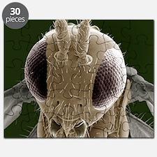 Parasitic wasp, SEM Puzzle