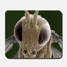 Parasitic wasp, SEM Mousepad