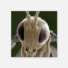 "Parasitic wasp, SEM Square Sticker 3"" x 3"""
