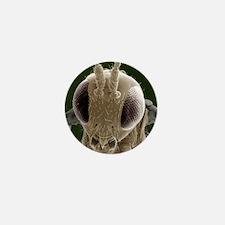 Parasitic wasp, SEM Mini Button