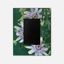 Passion flowers Picture Frame