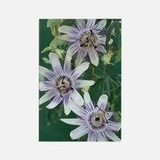 Passion flowers Rectangle Magnet