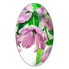 Parrot tulips (Tulipa sp.) Decal
