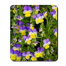 Pansy flowers (Viola x wittrockiana) Mousepad