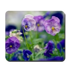 Pansies (Viola x wittrockiana) Mousepad