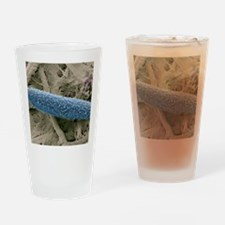 Paramecium protozoan, SEM Drinking Glass