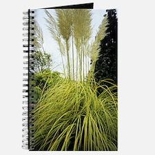 Pampas grass (Cortadeira 'Aureolineata') Journal