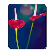 Painter's palette (Anthurium andraeanum) Mousepad