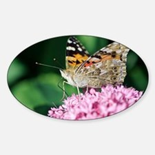 Painted Lady butterfly Sticker (Oval)