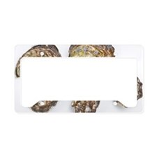 Pacific oysters License Plate Holder