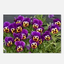 Pansies (Viola sp.) Postcards (Package of 8)