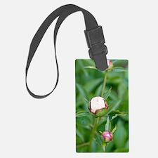 Paeonia lactiflora 'Shirley Temp Luggage Tag