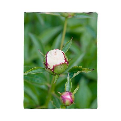 Paeonia lactiflora 'Shirley Temple' Twin Duvet