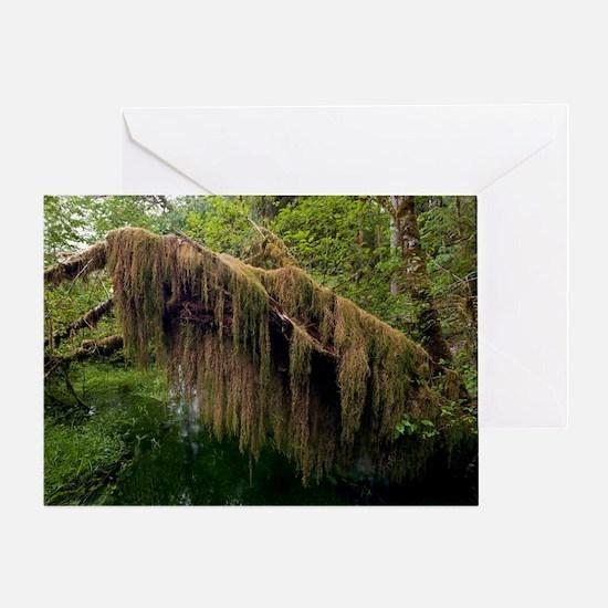 Oregon spikemoss (Selaginella oregan Greeting Card