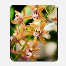 Orchid (Cymbidium) Mousepad