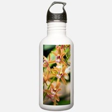 Orchid (Cymbidium) Water Bottle