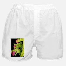 Orchid flowers, SEM Boxer Shorts