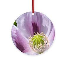 Opium poppy (Papaver somniferum) Round Ornament