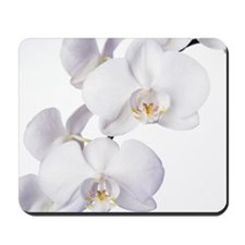 Orchid flowers Mousepad