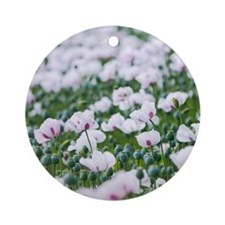 Opium poppies (Papaver somniferum) Round Ornament