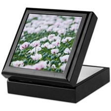 Opium poppies (Papaver somniferum) Keepsake Box