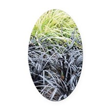 Ophiopogon planiscapus 'Nigrescens Oval Car Magnet