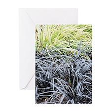 Ophiopogon planiscapus 'Nigrescens' Greeting Card