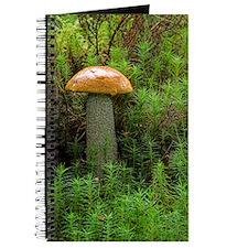 Orange birch bolete fungus Journal