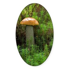 Orange birch bolete fungus Decal