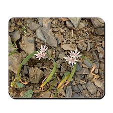 Olympic onion (Allium crenulatum) Mousepad