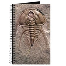 Olenellus gilberti trilobite fossil Journal