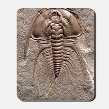 Olenellus gilberti trilobite fossil Mousepad