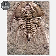 Olenellus gilberti trilobite fossil Puzzle